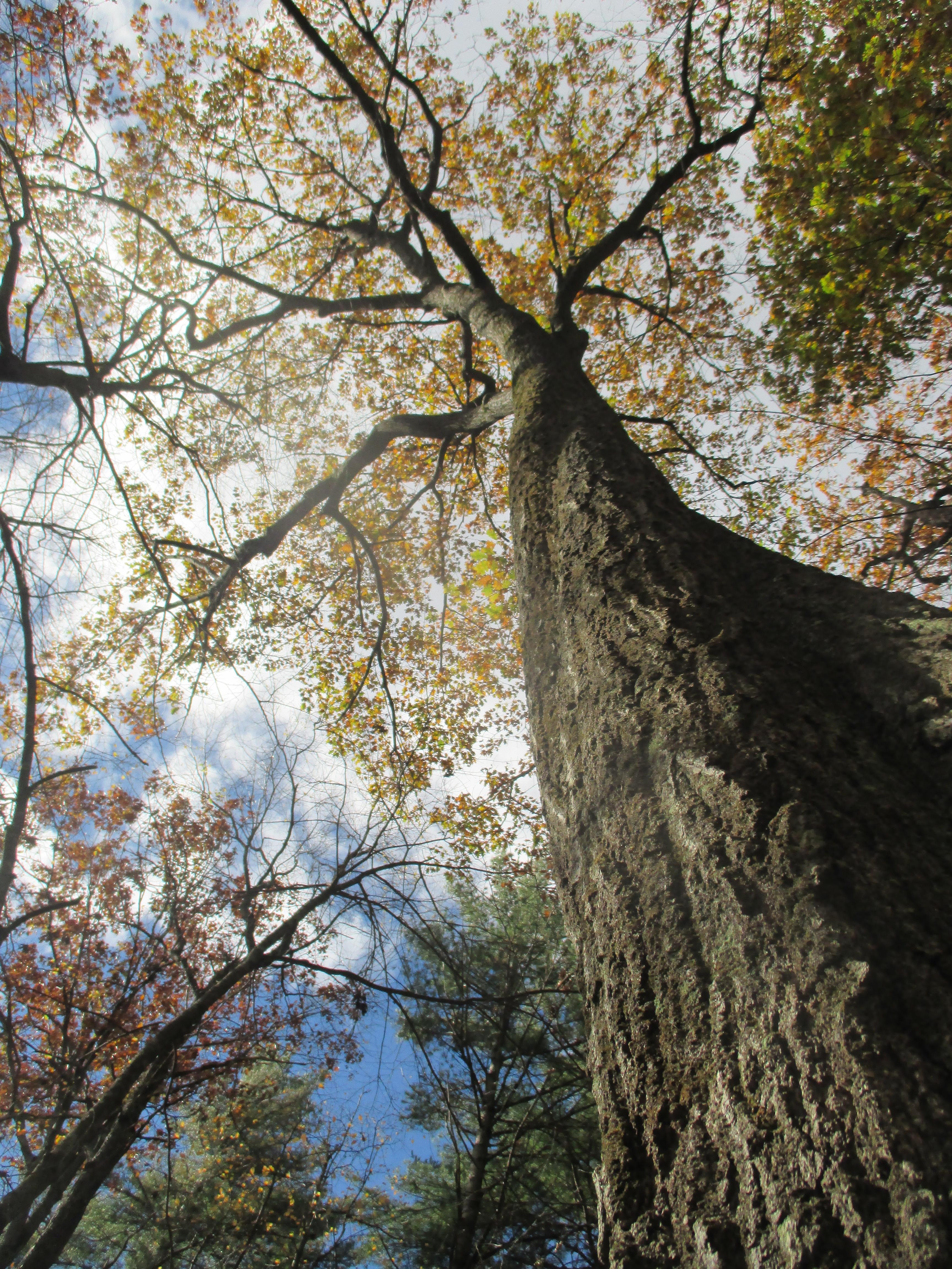 Harvard Forest: CRUNCH TIME AT HARVARD FOREST « Lynda V. Mapes Website