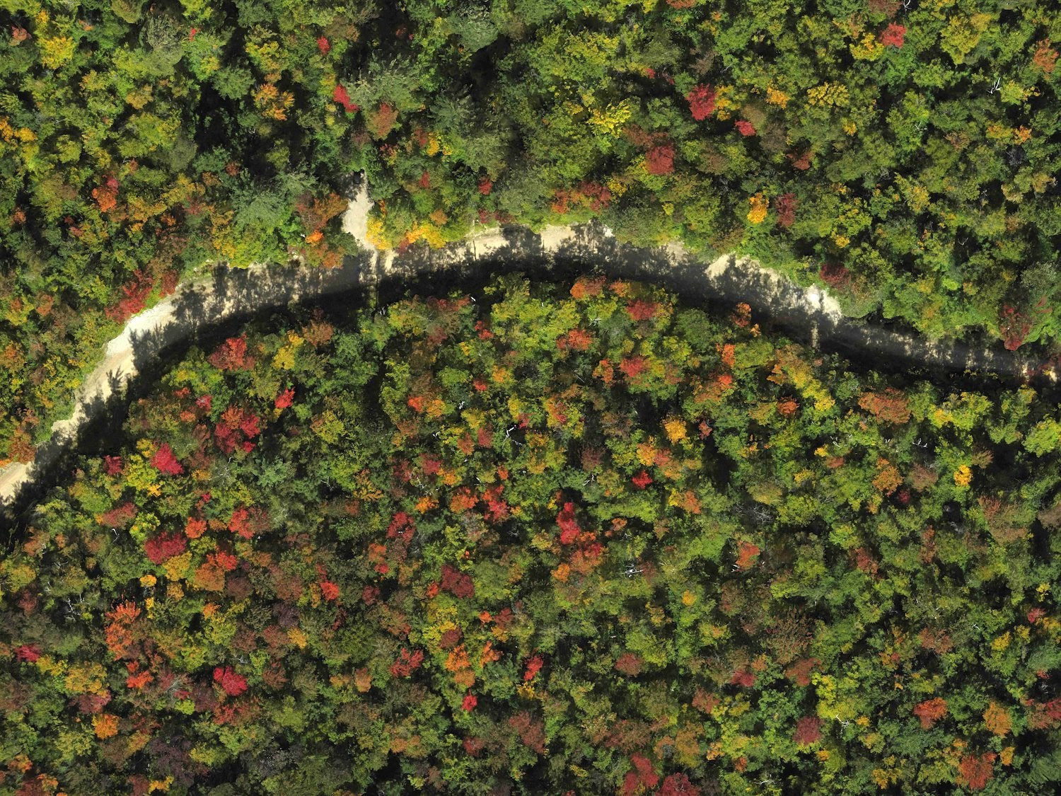 drones getting above the forest to see the trees lynda v mapes