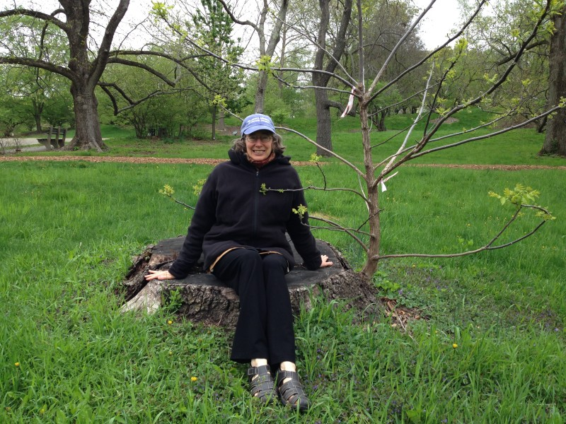 Me on launch day, May 5, at the Arnold Arboretum on the black walnut that gave its life for the lectern, and a beautiful new conference table at the Arnold Arboretum