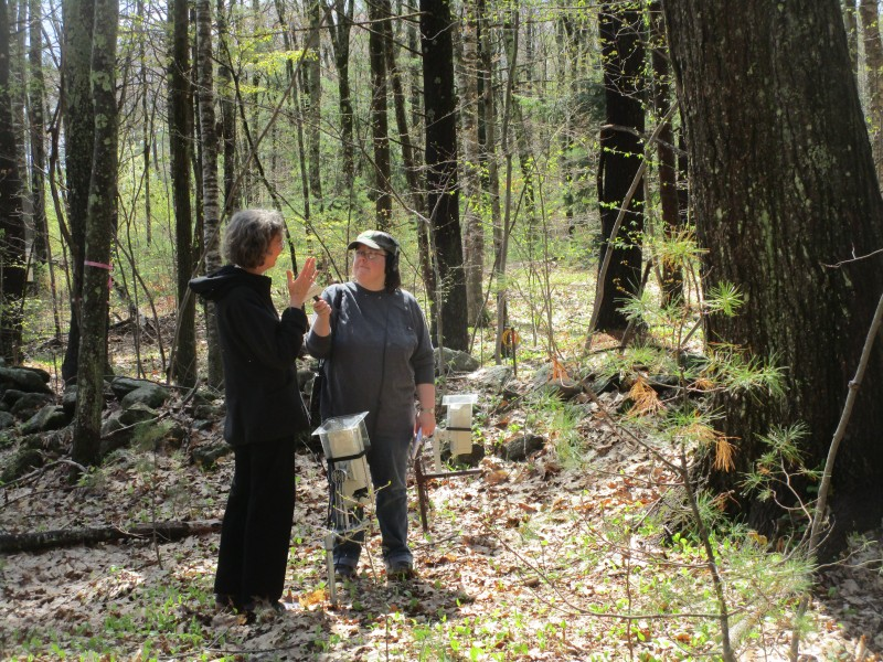 Carrie Healy of New England Public Radio interviewing me by the big oak, web cams at our feet. Photo by Doug MacDonald